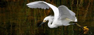 日本昔ばなし・動物のふしぎ発見:白鷺起源の温泉①