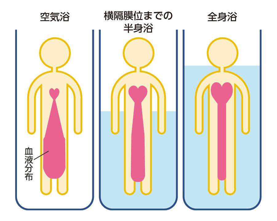 空気浴、半身浴、及び全身浴による静水圧の体内血液分布、心肺機能に及ぼす影響 2)